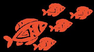 Ocean Sports Centre fish